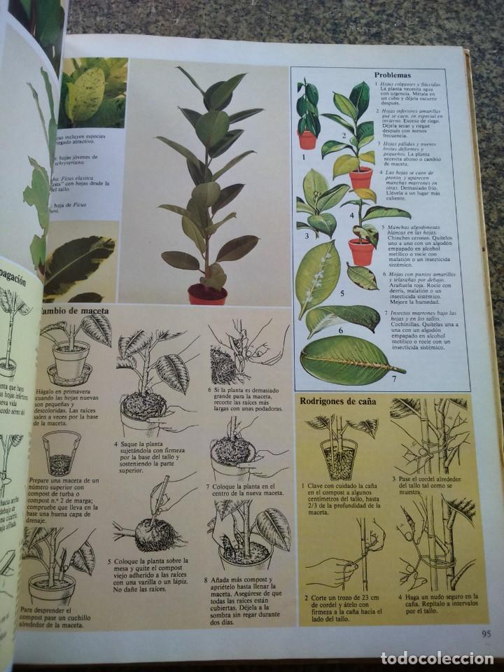 Libros de segunda mano: EL CUIDADO DE LAS PLANTAS DE INTERIOR -- GUIA PRACTICA -- CIRCULO 1981 -- - Foto 2 - 136112814