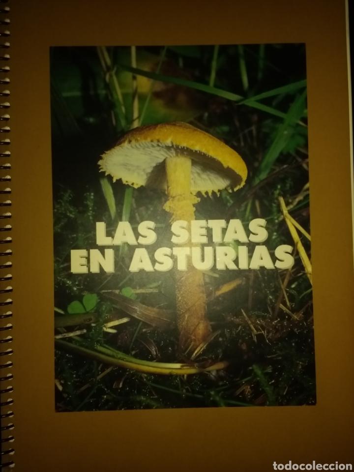 LAS SETAS EN ASTURIAS. VARIOS AUTORES. CAJA DE ASTURIAS. AÑO 1997. ENCUADERNACIÓN CON ESPIRAL. PÁGIN (Libros de Segunda Mano - Ciencias, Manuales y Oficios - Biología y Botánica)