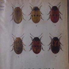 Libros de segunda mano: BIOLOGIA GENERAL II. ALVARADO. 10º EDICIÓN. Lote 139324010