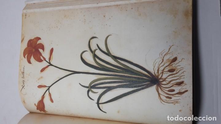 Libros de segunda mano: Códice Pomar . Atlas de la historia natural de Felipe II. - Foto 5 - 139990314