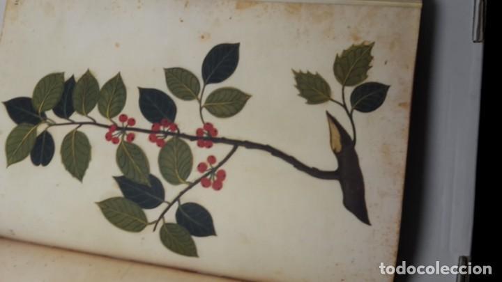 Libros de segunda mano: Códice Pomar . Atlas de la historia natural de Felipe II. - Foto 8 - 139990314