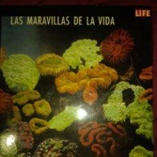 Libros de segunda mano: LAS MARAVILLAS DE LOS VIDA. LIFE. EDITORIAL LUIS MIRACLE S. A. TERCERA EDICIÓN OCTUBRE DE 1968. CAR. Lote 140782712
