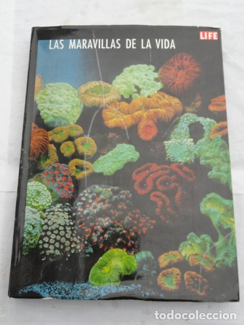 LIBRO LIFE - LAS MARAVILLAS DE LA VIDA -. AÑO 1968. (Libros de Segunda Mano - Ciencias, Manuales y Oficios - Biología y Botánica)
