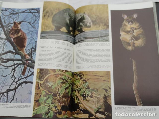 Libros de segunda mano: LIBRO LIFE - LAS MARAVILLAS DE LA VIDA -. AÑO 1968. - Foto 5 - 142343218