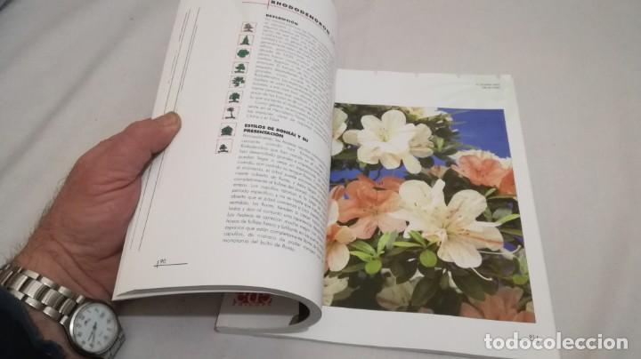 Libros de segunda mano: BONSAIS / GORDON OWEN / EDILUPA - Foto 13 - 194249078