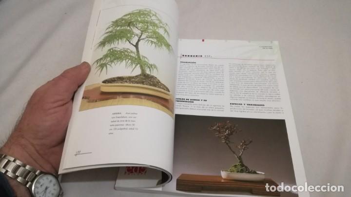 Libros de segunda mano: BONSAIS / GORDON OWEN / EDILUPA - Foto 18 - 194249078