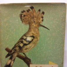 Libros de segunda mano: STQ.VOGEL AUS WALD UND FLUR.EDT, ARTIA.BRUMART TU LIBRERIA. Lote 144965006