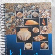 Libros de segunda mano: CONCHAS MARINAS DE ASTURIAS. GUIAS CAJASTUR, Nº 4. FRANCISCO MEXIA UNZURRUNZAGA. 2000. LOMO DE ALAMB. Lote 146073678