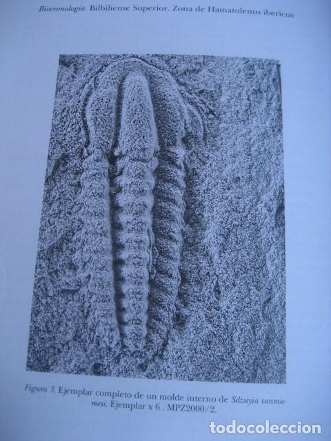 Libros de segunda mano: 25 AÑOS DE PALEONTOLOGIA ARAGONESA. POR GAMEZ Y LIÑAN 1999. FOSILES - Foto 3 - 126122531