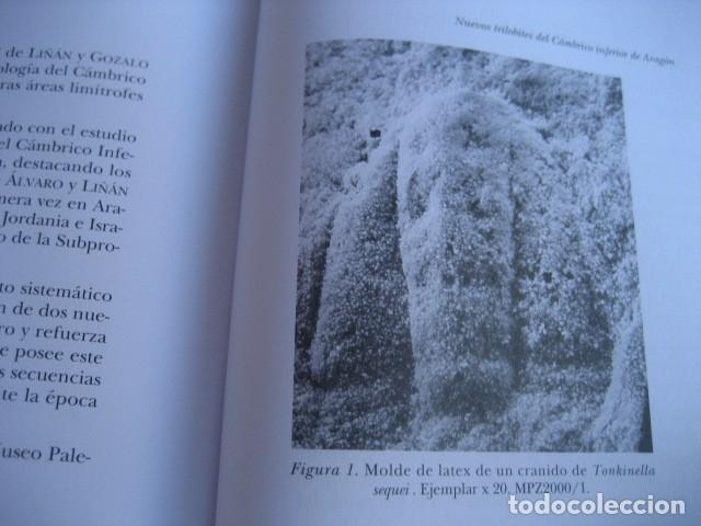 Libros de segunda mano: 25 AÑOS DE PALEONTOLOGIA ARAGONESA. POR GAMEZ Y LIÑAN 1999. FOSILES - Foto 4 - 126122531