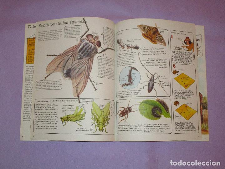 Gebrauchte Bücher: LA SENDA DE LA NATURALEZA ( INSECTOS ) - EDICIONES PLESA - SM EDICIONES - Foto 3 - 146769794
