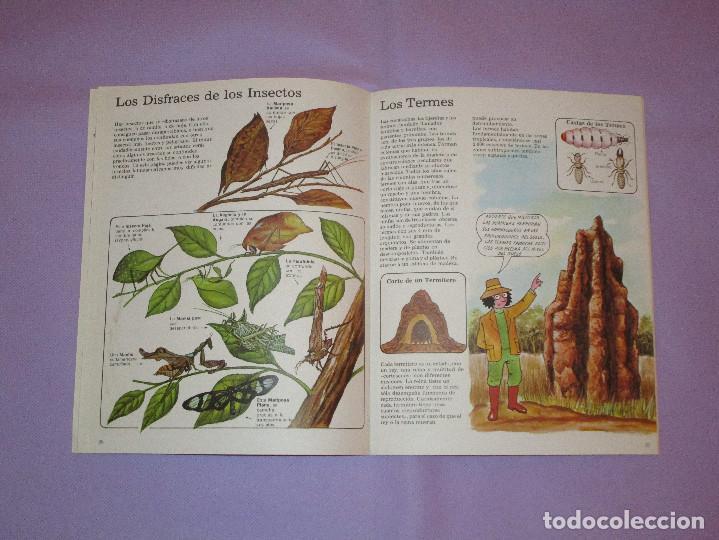 Gebrauchte Bücher: LA SENDA DE LA NATURALEZA ( INSECTOS ) - EDICIONES PLESA - SM EDICIONES - Foto 4 - 146769794