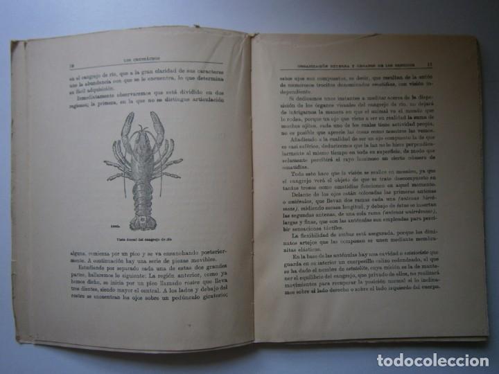 Libros de segunda mano: LOTE LIBROS DE LA NATURALEZA CRUSTACEOS POBLADORES DE MAR MUNDO ALADO MAMIFEROS MARINOS VIDA TIERRA - Foto 12 - 146870510