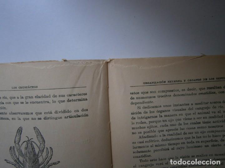 Libros de segunda mano: LOTE LIBROS DE LA NATURALEZA CRUSTACEOS POBLADORES DE MAR MUNDO ALADO MAMIFEROS MARINOS VIDA TIERRA - Foto 13 - 146870510