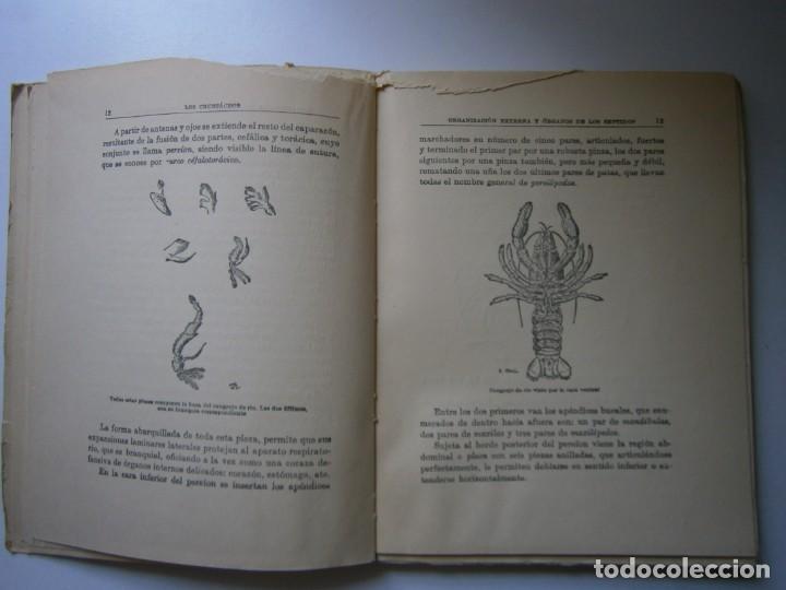 Libros de segunda mano: LOTE LIBROS DE LA NATURALEZA CRUSTACEOS POBLADORES DE MAR MUNDO ALADO MAMIFEROS MARINOS VIDA TIERRA - Foto 14 - 146870510