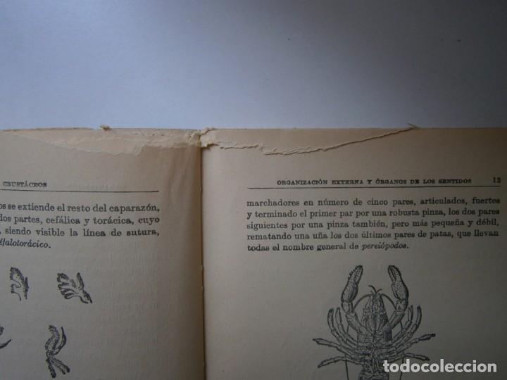 Libros de segunda mano: LOTE LIBROS DE LA NATURALEZA CRUSTACEOS POBLADORES DE MAR MUNDO ALADO MAMIFEROS MARINOS VIDA TIERRA - Foto 15 - 146870510