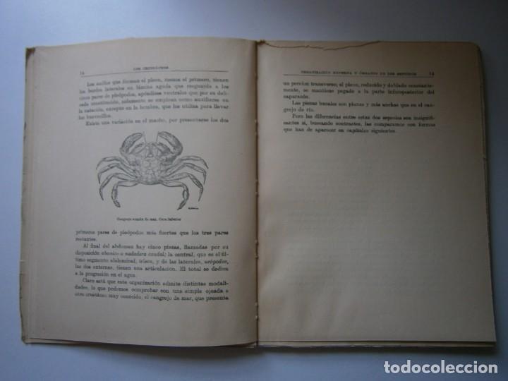 Libros de segunda mano: LOTE LIBROS DE LA NATURALEZA CRUSTACEOS POBLADORES DE MAR MUNDO ALADO MAMIFEROS MARINOS VIDA TIERRA - Foto 16 - 146870510