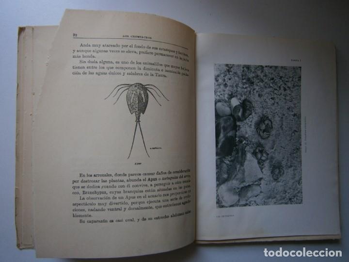 Libros de segunda mano: LOTE LIBROS DE LA NATURALEZA CRUSTACEOS POBLADORES DE MAR MUNDO ALADO MAMIFEROS MARINOS VIDA TIERRA - Foto 19 - 146870510