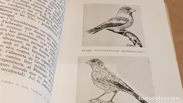 Libros de segunda mano: ELS OCELLS DE LES TERRES CATALANES / VOL II / JOAQUIM MALUQUER I SOSTRES / ED - BARCINO-1956. - Foto 4 - 148892570