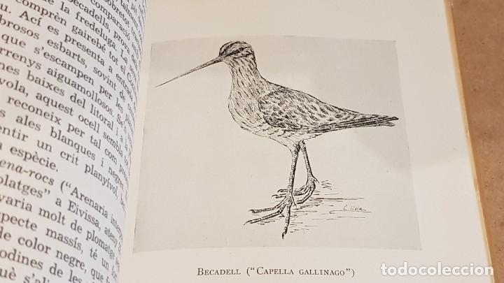 Libros de segunda mano: ELS OCELLS DE LES TERRES CATALANES / VOL II / JOAQUIM MALUQUER I SOSTRES / ED - BARCINO-1956. - Foto 5 - 148892570