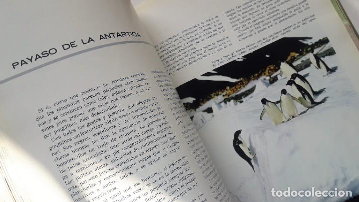 Libros de segunda mano: EL FABULOSO REINO ANIMAL. Selecciones Reader´s Digest. - Foto 4 - 149004134