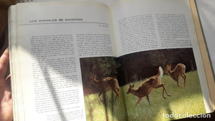 Libros de segunda mano: EL FABULOSO REINO ANIMAL. Selecciones Reader´s Digest. - Foto 6 - 149004134