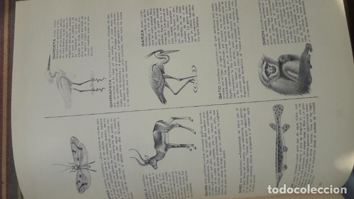 Libros de segunda mano: EL FABULOSO REINO ANIMAL. Selecciones Reader´s Digest. - Foto 10 - 149004134