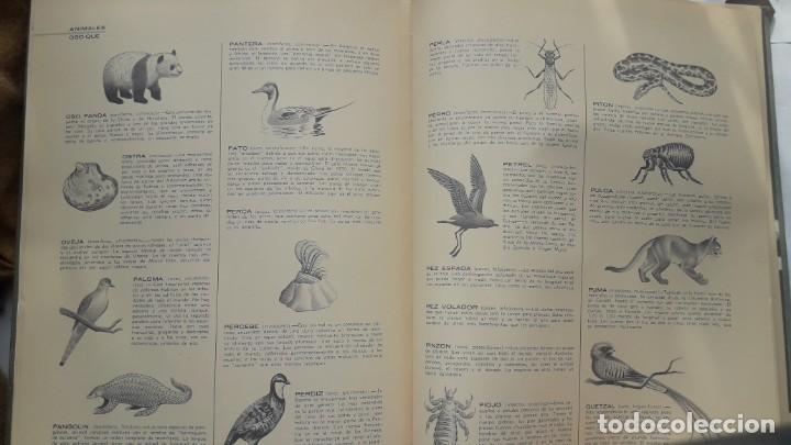 Libros de segunda mano: EL FABULOSO REINO ANIMAL. Selecciones Reader´s Digest. - Foto 11 - 149004134
