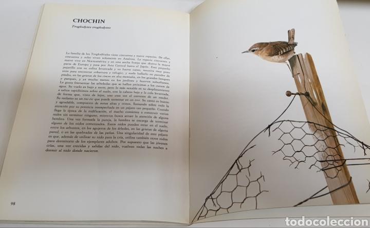 Libros de segunda mano: Pajaros de bosque y jardin - alan michell - arm06 - Foto 2 - 149647045