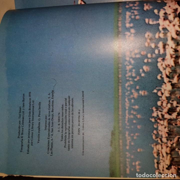 Libros de segunda mano: EL FABULOSO MUNDO DE LAS AVES Y LOS PECES-1976 - Foto 3 - 150805458