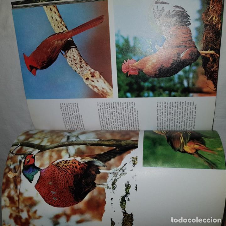 Libros de segunda mano: EL FABULOSO MUNDO DE LAS AVES Y LOS PECES-1976 - Foto 5 - 150805458