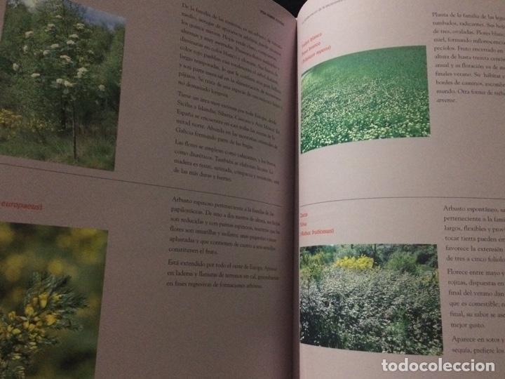 Libros de segunda mano: Vida sobre estéril. La rehabilitación de la escombrera exterior de la mina de As Pontes - Foto 9 - 152054054