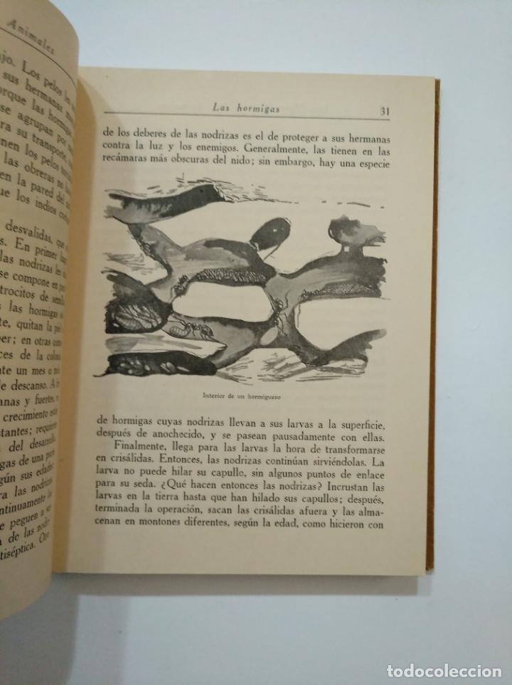 Libros de segunda mano: LAS MARAVILLAS DE LOS ANIMALES. - BALLVÉ, AGUSTÍN. SEIX BARRAL 1948. TDK372 - Foto 2 - 154316850