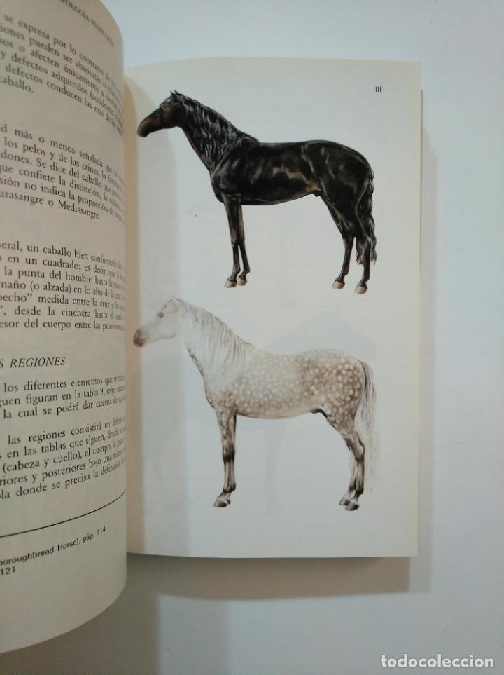 Libros de segunda mano: GUÍA DEL CABALLO Y DEL PONEY. - H. L. BLANC. TDK374 - Foto 2 - 154682950
