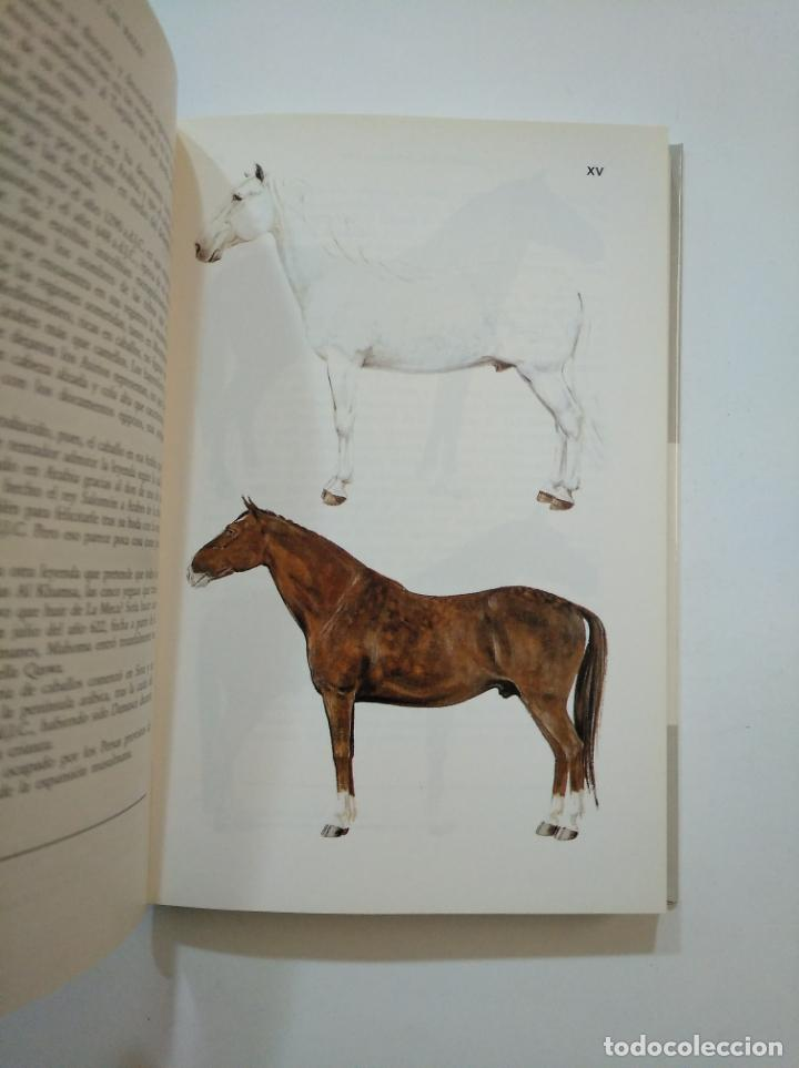 Libros de segunda mano: GUÍA DEL CABALLO Y DEL PONEY. - H. L. BLANC. TDK374 - Foto 3 - 154682950