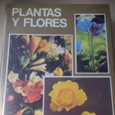 Livros em segunda mão: PLANTAS Y FLORES. EVEREST. AÑO 1981. CARTONÉ GRAN FORMATO. PÁGINAS 190. PESO 1500 GR.. Lote 156201042