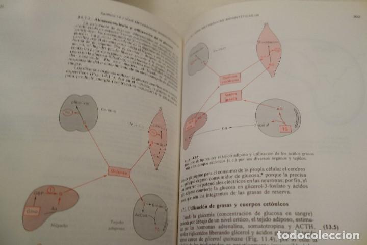 Libros de segunda mano: BIOQUÍMICA HUMANA- - Foto 14 - 156423766