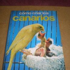 Libros de segunda mano: COMO CRIAR LOS CANARIOS / HISPANO EUROPEA GUIA. Lote 161507590