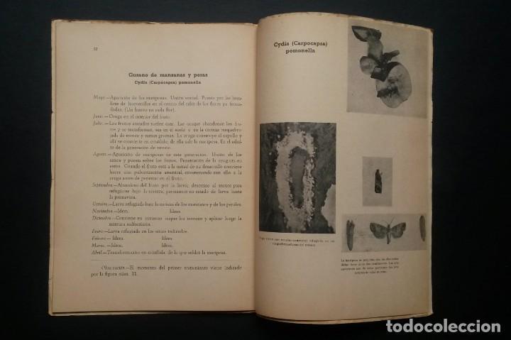 Libros de segunda mano: A174.- TRATAMIENTOS CONTRA LAS PLAGAS DE LOS CULTIVOS.- ANTONIO BERTRAN - Foto 7 - 165345830