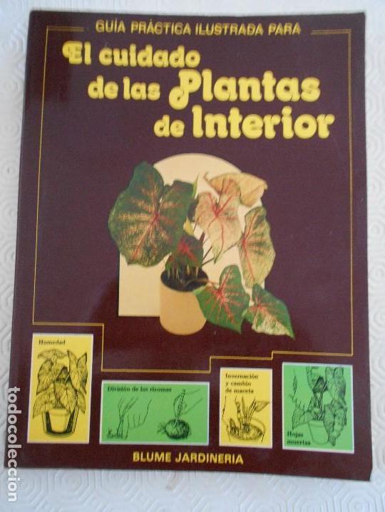 EL CUIDADO DE LAS PLANTAS DE INTERIOR. GUIA PRACTICA ILUSTRADA. BLUME JARDINERIA. POR DAVID LONGMAN. (Libros de Segunda Mano - Ciencias, Manuales y Oficios - Biología y Botánica)