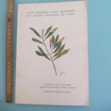 Libros de segunda mano: CLAVE SISTEMICA PARA RECONOCER LOS AGENTES PATOGENOS DEL OLIVO 1972 MIGUEL BENLLOCH-FAUSTINO ANDRES. Lote 167874384