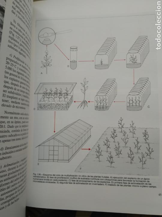 Libros de segunda mano: ARBORICULTURA GENERAL/ENRICO BALDINI - Foto 3 - 167970906