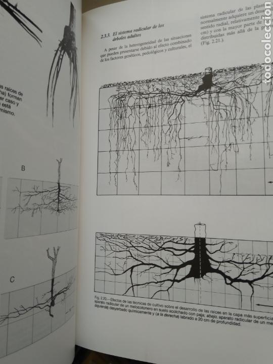 Libros de segunda mano: ARBORICULTURA GENERAL/ENRICO BALDINI - Foto 5 - 167970906