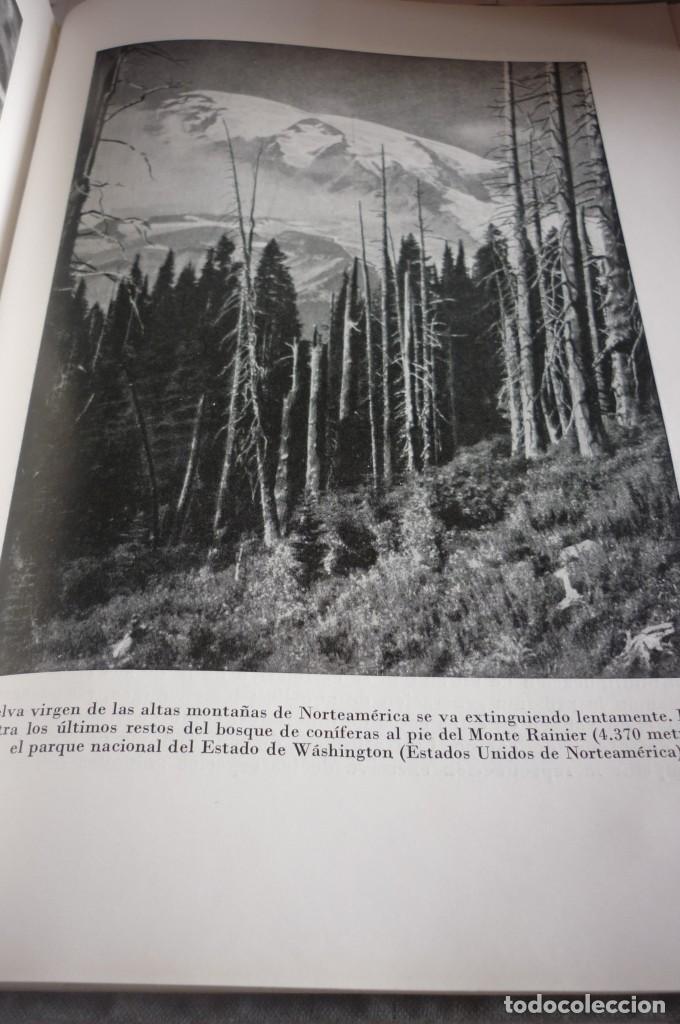 Libros de segunda mano: 1953 EL REINO DE LOS ANIMALES. ESPASA CALPE. TRES TOMOS. COMPLETA - Foto 6 - 168373880