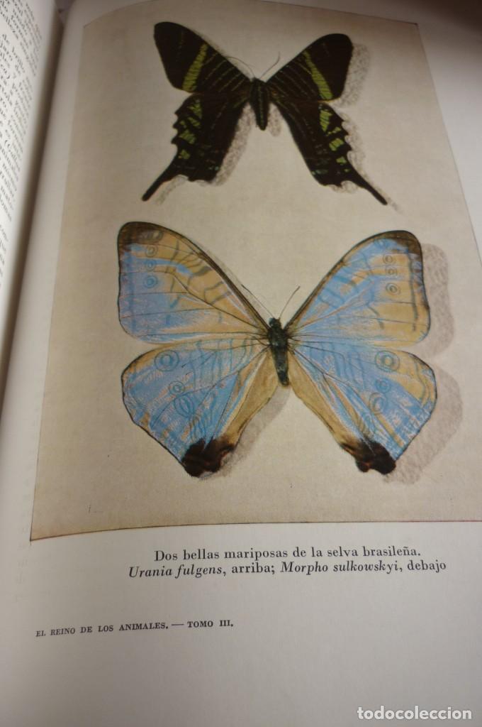 Libros de segunda mano: 1953 EL REINO DE LOS ANIMALES. ESPASA CALPE. TRES TOMOS. COMPLETA - Foto 7 - 168373880