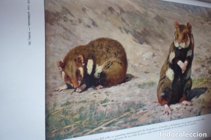 Libros de segunda mano: 1953 EL REINO DE LOS ANIMALES. ESPASA CALPE. TRES TOMOS. COMPLETA - Foto 8 - 168373880