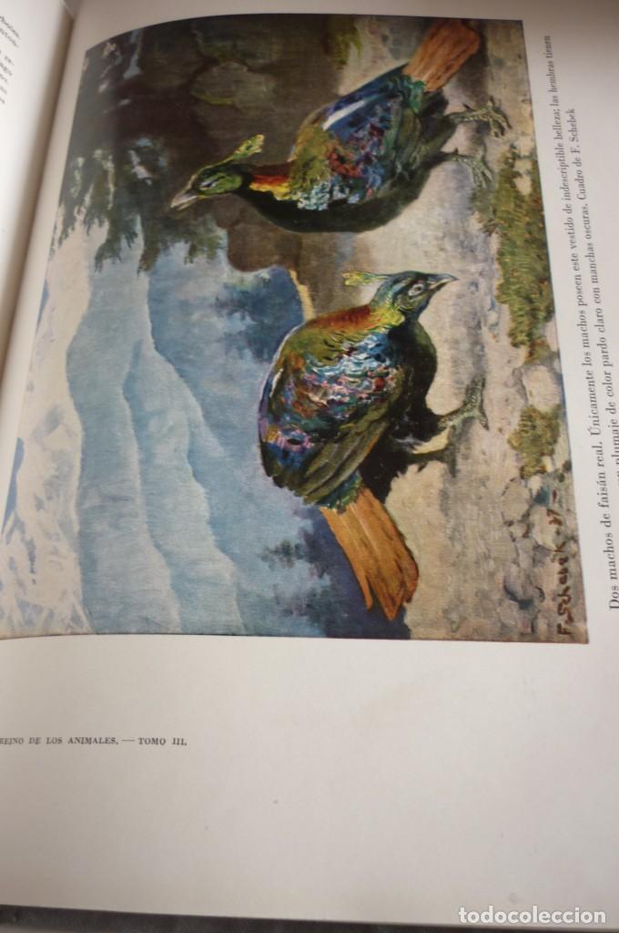 Libros de segunda mano: 1953 EL REINO DE LOS ANIMALES. ESPASA CALPE. TRES TOMOS. COMPLETA - Foto 10 - 168373880