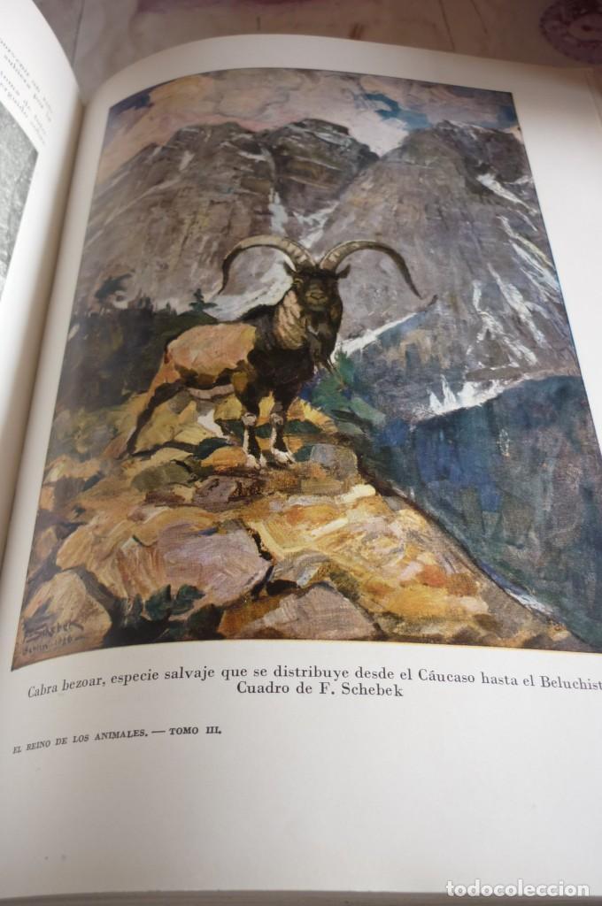Libros de segunda mano: 1953 EL REINO DE LOS ANIMALES. ESPASA CALPE. TRES TOMOS. COMPLETA - Foto 11 - 168373880