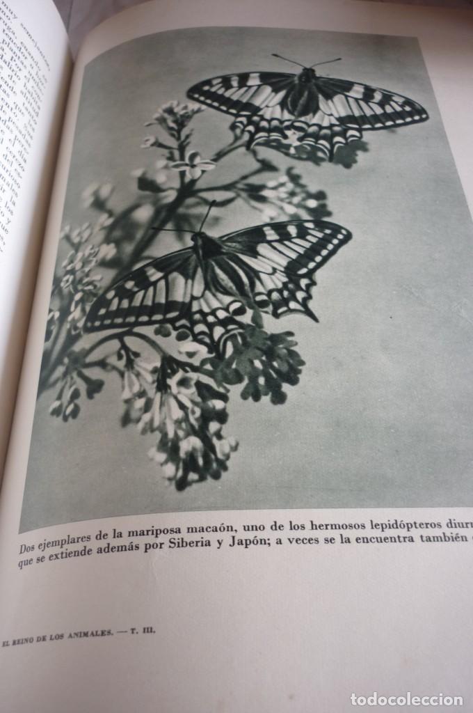 Libros de segunda mano: 1953 EL REINO DE LOS ANIMALES. ESPASA CALPE. TRES TOMOS. COMPLETA - Foto 12 - 168373880