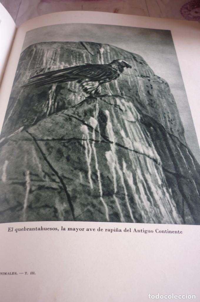 Libros de segunda mano: 1953 EL REINO DE LOS ANIMALES. ESPASA CALPE. TRES TOMOS. COMPLETA - Foto 13 - 168373880